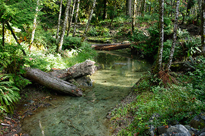 Clean creek in forest